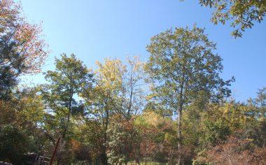 今日の紅葉の様子