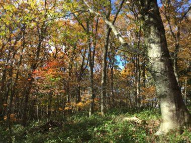 ペンション横の林