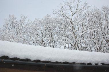 これで40㎝の積雪