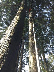 引き倒し用のワイヤーロープを登って取付ける