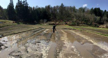 畝作りは水位を利用して高さ調整