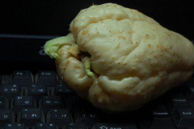 机の上で発芽したハヤト瓜