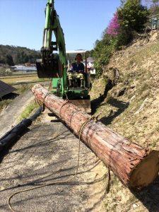 樹齢65年以上の桧をバックホーで山から曳下す