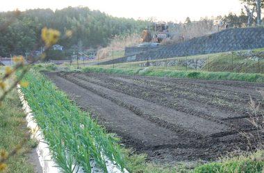 日没前に除草のために耕起