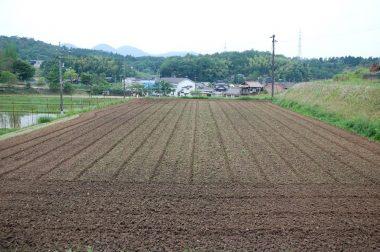 雨が降ると草がぐんぐん育つので除草のために耕す