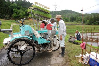 肥料に発酵米糠ペレットを載せる