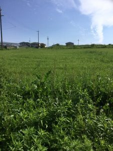 現場から見える農場の一部