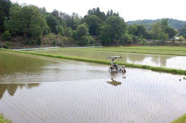 田植から14日目で2回目の除草 この田んぼは肥料など何も入れてない