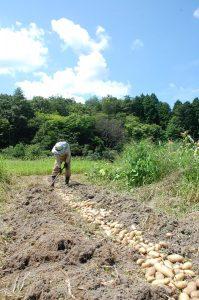 水分補給しながら昼までには掘り終えた
