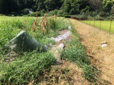 防虫ネットが散乱している所に畝作り