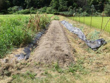 草の下のビニールマルチを剝がしたらきれいな畝が出た