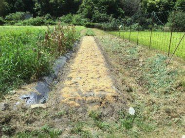 草木灰と米ぬかボカシを撒いて管理機で耕す