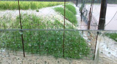 畔の全体から水が溢れ出し獣害防止柵を倒す