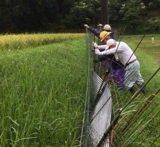 フェンスを押して鉄筋の杭を抜く