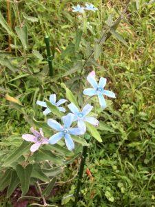 春先から次々に咲く