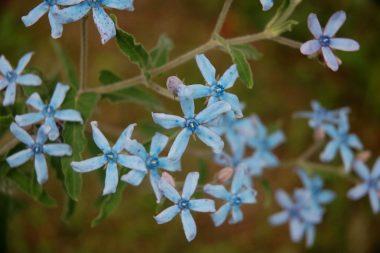 花は春から次々と咲く インクがにじんだような色