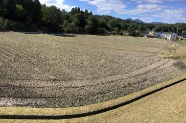 この5枚の田んぼで1.2ha(1町2反)全て自然農法